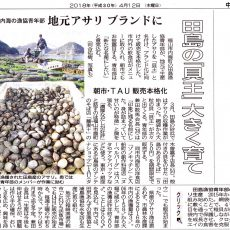 田島アサリ 180412 中国新聞 掲載記事 - 備後特産品研究会